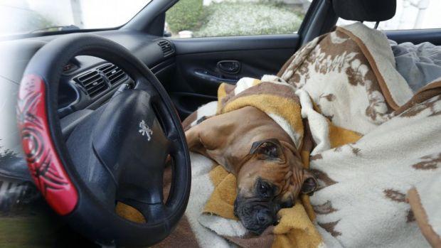 Perro encerrado en un coche en Lugo