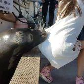 Un león marino atrapa a una niña y la tira al agua