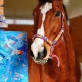 El caballo Metro y su cuadro