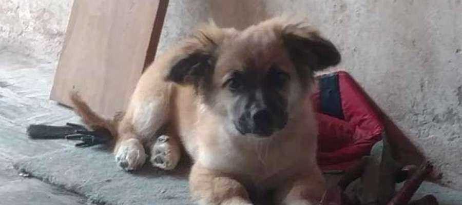 Orejón, el perro que encontró a un bebé abandonado en una bolsa en Buenos Aires