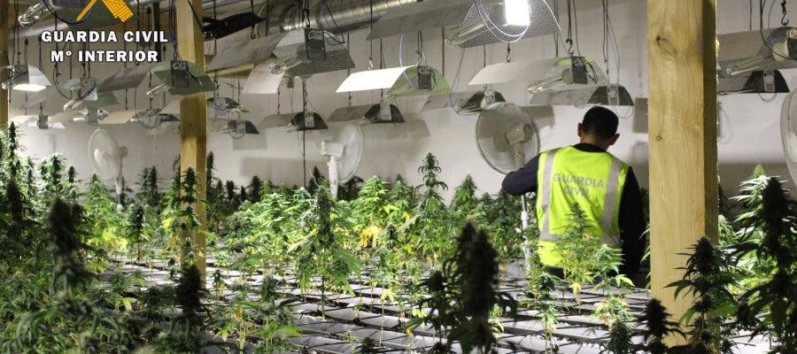 Desmantelada la mayor plantación de marihuana encontrada en Cantabria