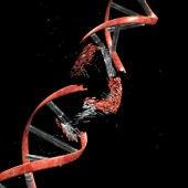La causa de muchos canceres son errores en el corrector del ADN