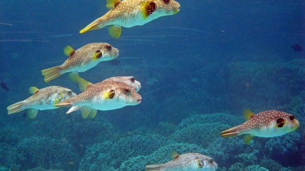 Antonio Martínez Ron: ¿Existe la memoria de pez?
