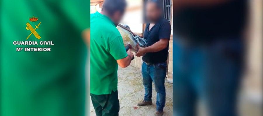 La Guardia Civil interviniendo a los animales en Málaga