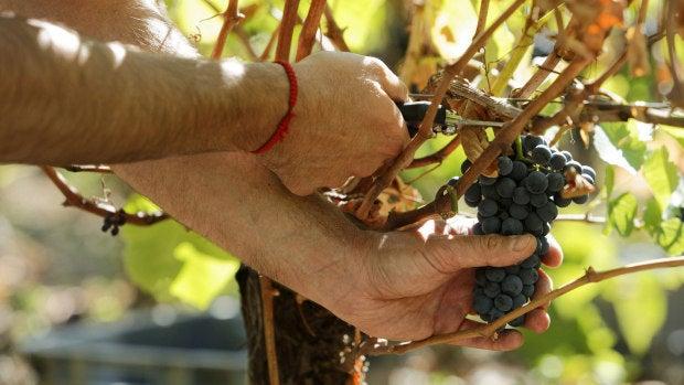 ¿Cómo es la vendimia en Castilla La Mancha?