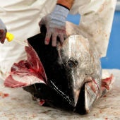Despiece tradicional de un atún