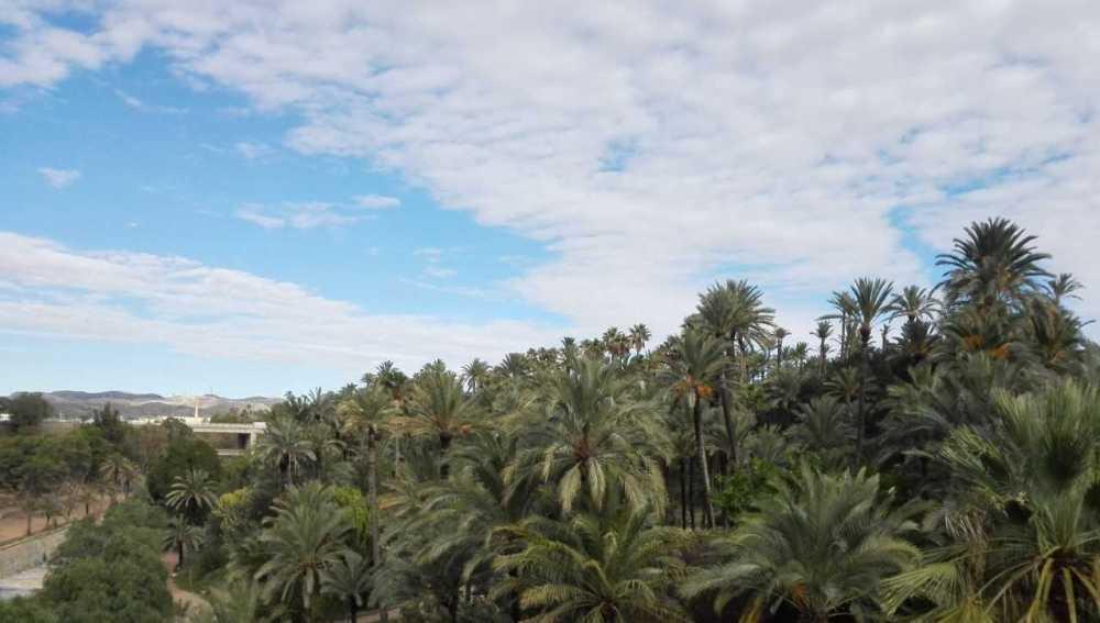 Vista del Palmeral de Elche.