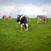 Los agricultores y ganaderos vuelven a protestar