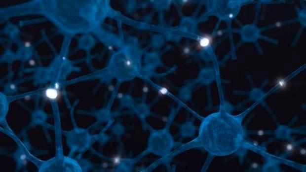 Fronteras del futuro: Logran reproducir funciones cerebrales in vitro