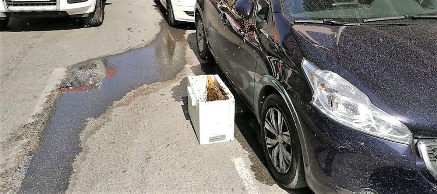 Caja con feromonas para captar las abejas junto al coche en el que se ha formado el enjambre