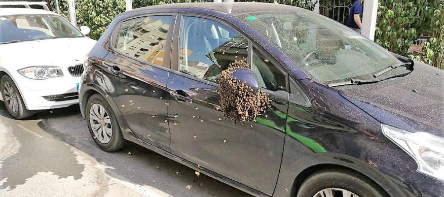 Enjambre de abejas en el retrovisor del coche estacionado en la calle José María Buck