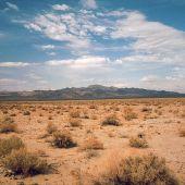 Bioingenieria para combatir los efectos del cambio climatico