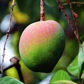 ¿Por qué el mango debería estar siempre en tu lista de la compra?