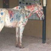 Fotografía de un caballo pintado durante una actividad escolar