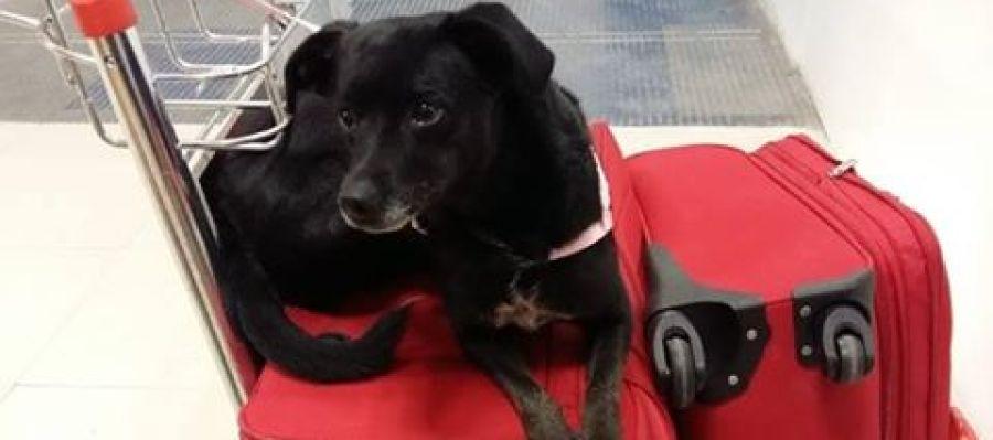Piny, la perrita perdida en Barajas