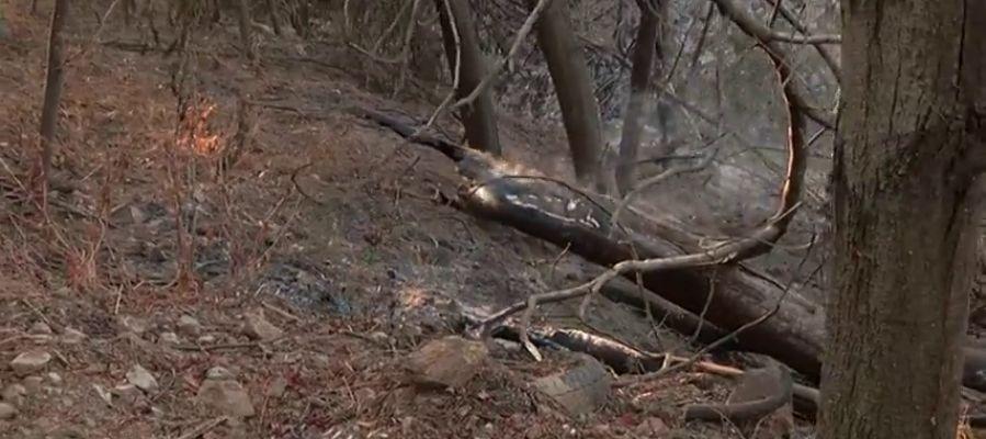 El incendio que afecta a la región del Algarve ya no presenta frentes activos