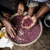 Agricultores de Kenia