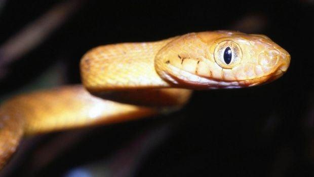 El Gabinete: Serpientes informativas