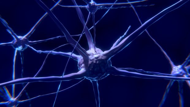 Tertulia Zona Cero: Un experimento para unir el cerebro de un humano y de una rata