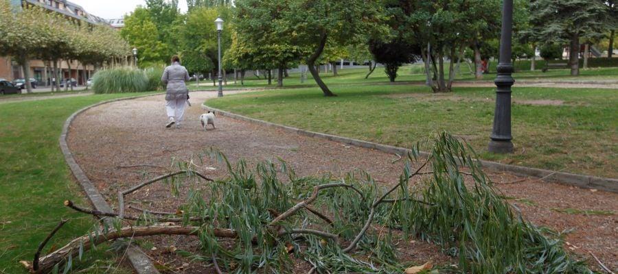 Una rama caída en el parque León Felipe de Zamora debido al vendaval provocado por el ciclón tropical Leslie