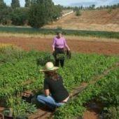 El lunes se conmemora el Día Internacional de la Mujer Rural