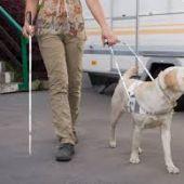 perro guia ciego