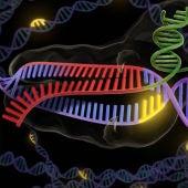 Del deseo a la realidad la edicion genetica aun no esta preparada para tratar a pacientes