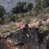 Durísimas imágenes de cómo 12 perros se despeñan por un barranco ante la irresponsabilidad de un cazador