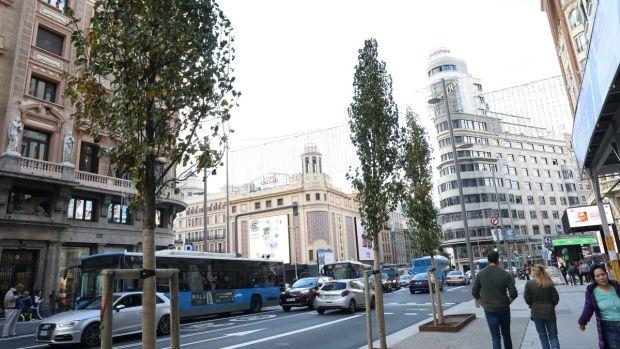 Varios de los árboles que pueden verse en la nueva Gran Vía de Madrid