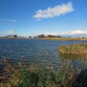 Espacio conocido como La Reserva en el Parque Natural de El Hondo