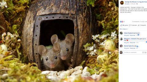 Casitas para ratones en el jardín