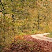 Caminos en la Selva de Irati