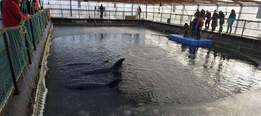 Interior de la cárcel de ballenas de Rusia