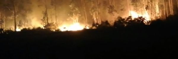 Activos en Galicia cuatro incendios, uno de los cuales ha arrasado 200 hectáreas