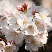 Floreciendo en primavera (26-03-19)