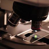 Una muestra analizada mediante microscopio
