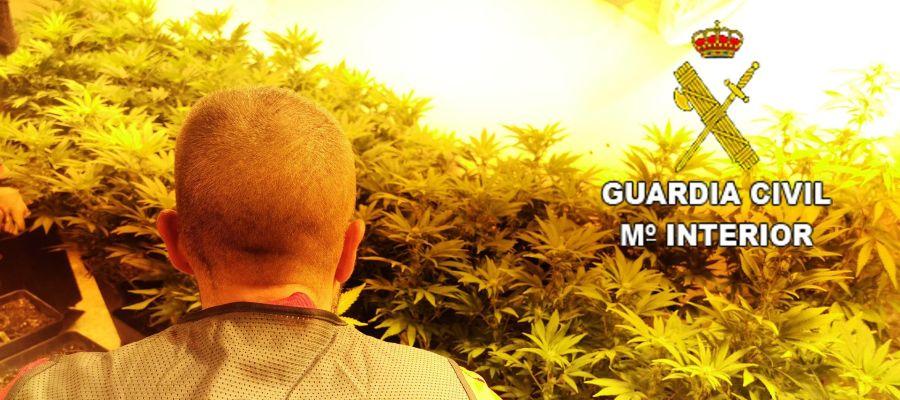 Plantación de marihuana desmantelada en Elda.