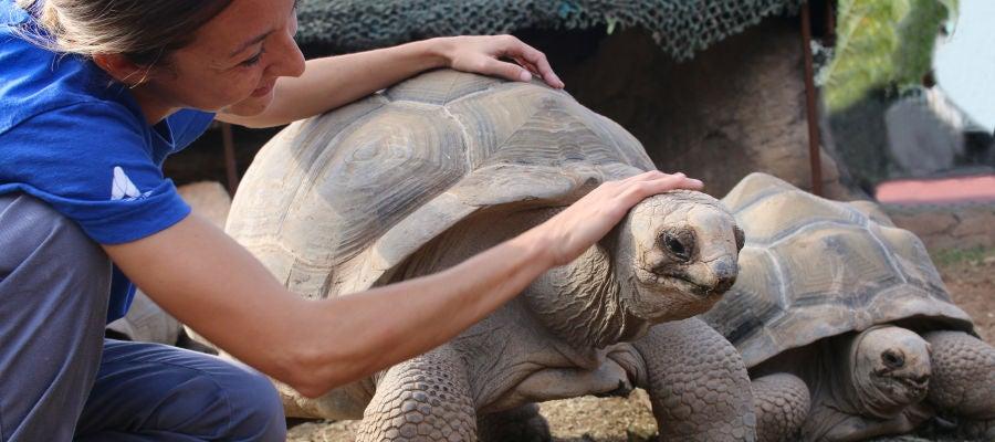 Darwin es una de las tortugas de Aldabra.
