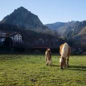 Oseja de Sajambre en Picos de Europa