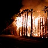 Uno de los incendios registrados la pasada madrugada en un huerto de palmeras del Camp d'Elx.