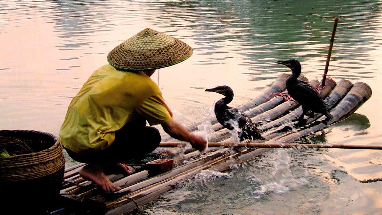 El círculo secreto: La adivinación en China