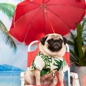 ¿Tu perro lo pasa mejor que tú en vacaciones?