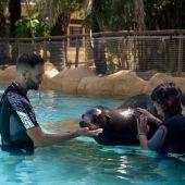 Programa terapéutico con leones marinos de la Fundación Río Safari de Elche.