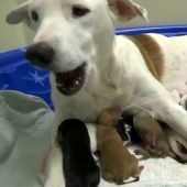 Una perra da a luz a 20 cachorros en Texas
