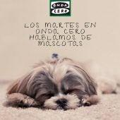 Mascotas Onda Cero Talavera