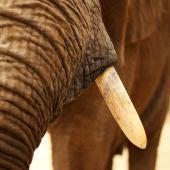 Imagen de un elefante