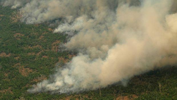 La importancia del Amazonas y por qué debemos protegerlo