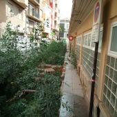 Vegetación en los restos de los Baños árabes del Mercado Central.