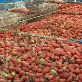 Llega la Tomatina de Buñol