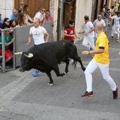 Recorrido de un toro durante los encierros de Cuéllar